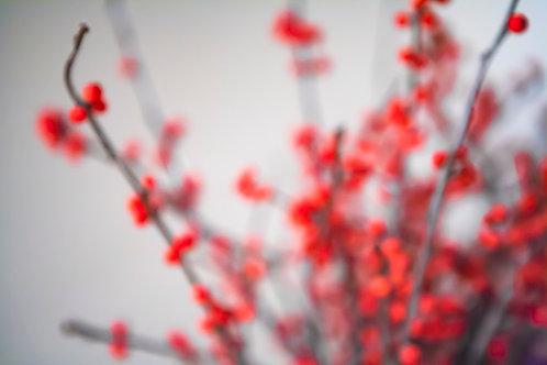 Winter Berries Glow