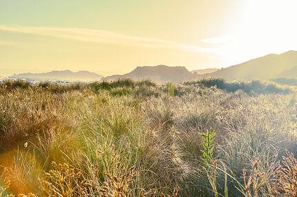 Warm toned seascape ocean landscape art Sea grass Makorori Beach Gisborne New Zealand