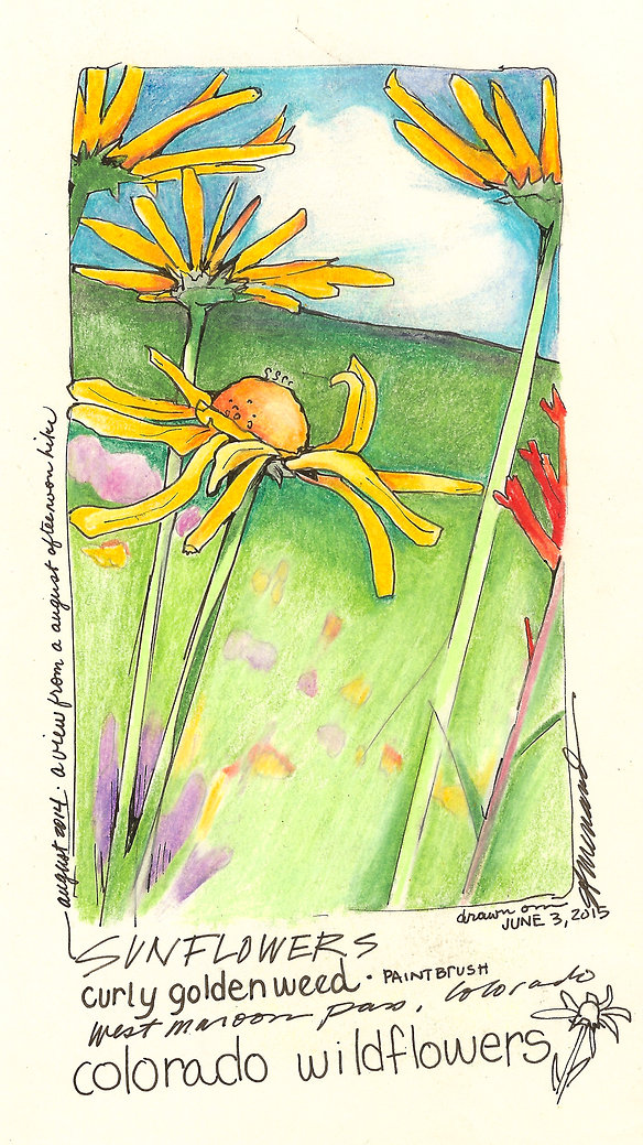 SunflowerDrawingCard.jpg