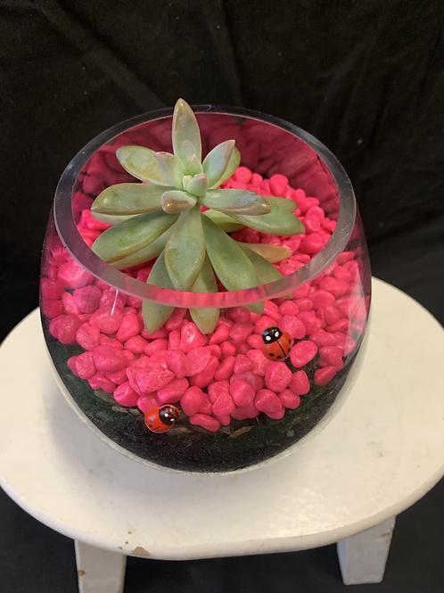 Fresh ladybug succulent pot