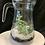 Thumbnail: Fresh Jug succulent