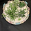 Thumbnail: Fresh city pot succulent
