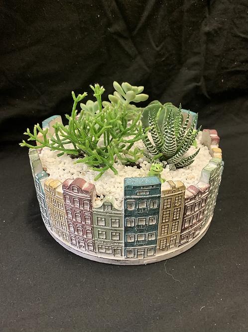 Fresh city pot succulent