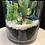Thumbnail: Fresh elf succulent pot