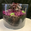 Thumbnail: Fresh purple rock succulent pot