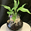 Thumbnail: Fresh indoor plant pot