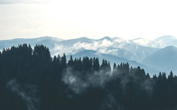 clouds-fog-forest-9754_edited