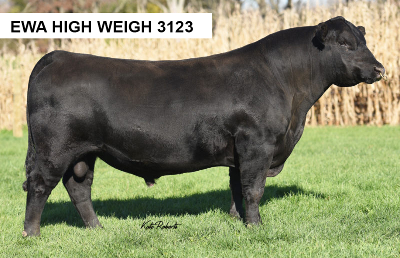 EWA High Weigh 3123