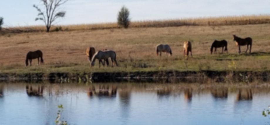 20171028_horses by full pond.jpg