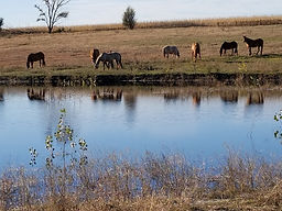 20171028_horses by full pond.jpg
