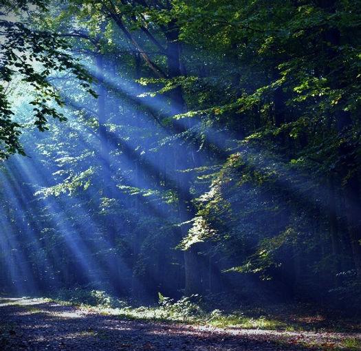 Forest_edited_edited_edited_edited.jpg