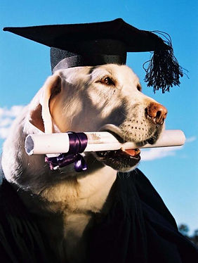 Dog graduating from training class