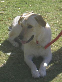 DOG TRAINING 9809 021.JPG