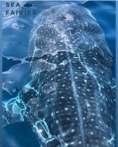 Whale shark are the sea fairies.