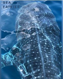 Whale Shark swim Isla Mujeres snorkel