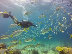 Diving with Jacks
