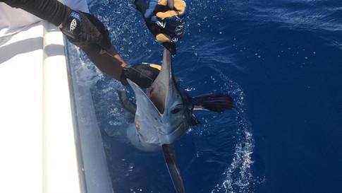 Sailfish, Marlin, Deep sea Fishing