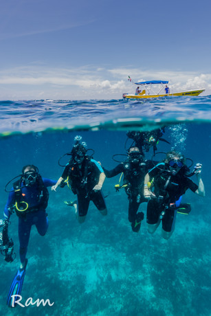 Scuba diving tours, shared and private tours.