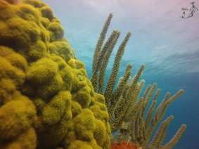 Coral reefs Isla Mujeres