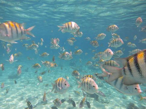 Snorkeling the caribbean