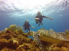 Turtle in Manchones