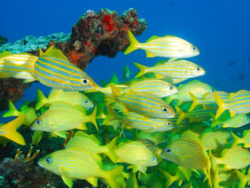 Snorkel trips, family trips, private and shared trips.