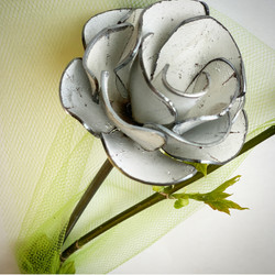 White Shabby Chic' Rose