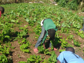 Kawangware Community Garden