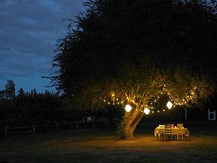 Outdoor Garden Dinner