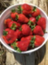 strawberry bucket.jpg