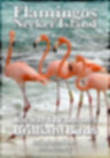 flamingos of necker island