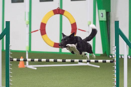 beep jump 2.jpg