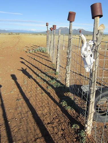 Finn sheep breeders in New Mexico