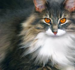 cat-1088880