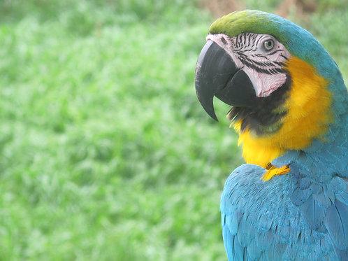 Manaus e Amazónia
