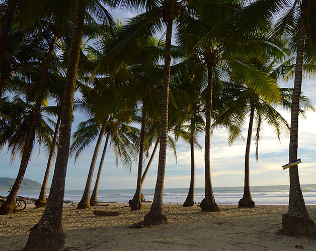 palmeiras st.jpg