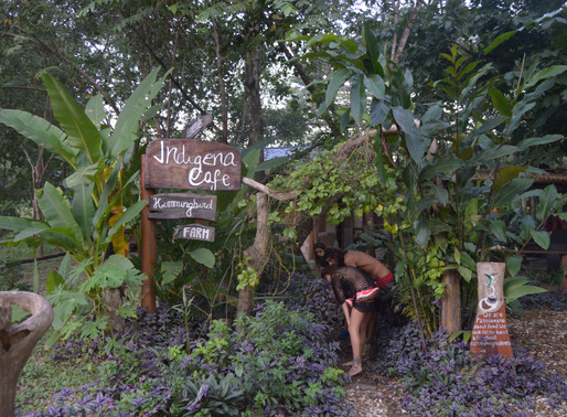Indigena Café - Voluntariado em Cabuya