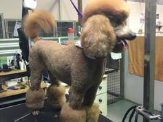 dog groom 7.jpg