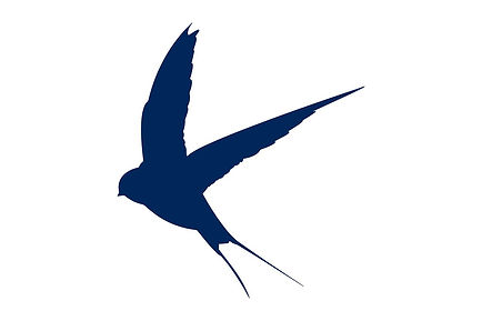 blue swallow.jpg