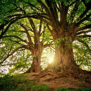 Understanding Zen Tree Care