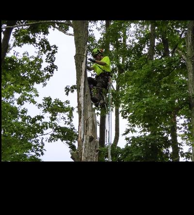 Zen Tree Care Tree Restoration1.png