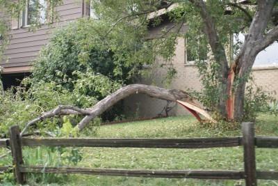 Zen Tree Care Tree Restoration