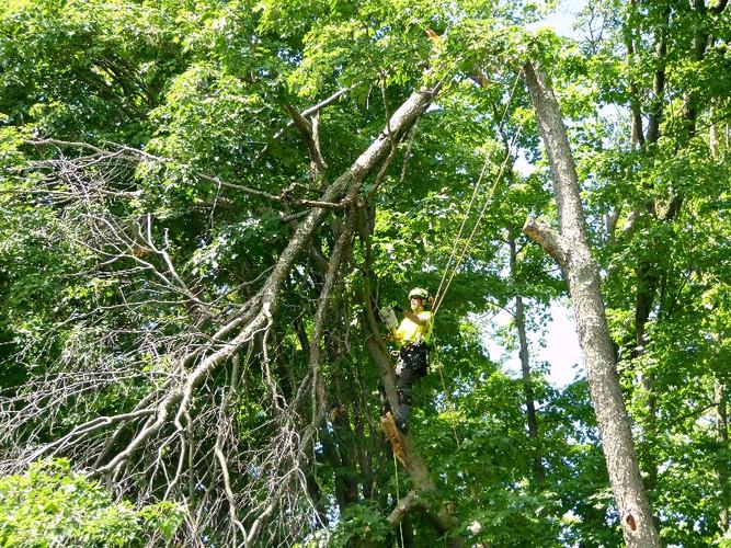 Zen Tree Care