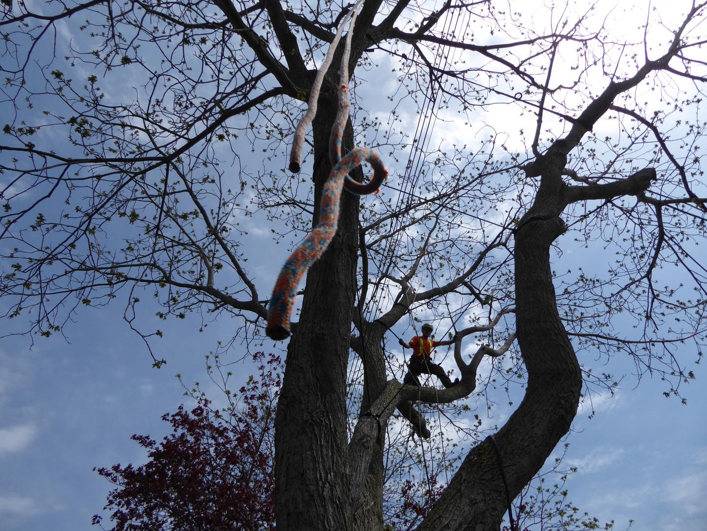 Zen Tree Care Bracing & Cabling