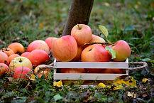 apple-3695288_1920.jpg