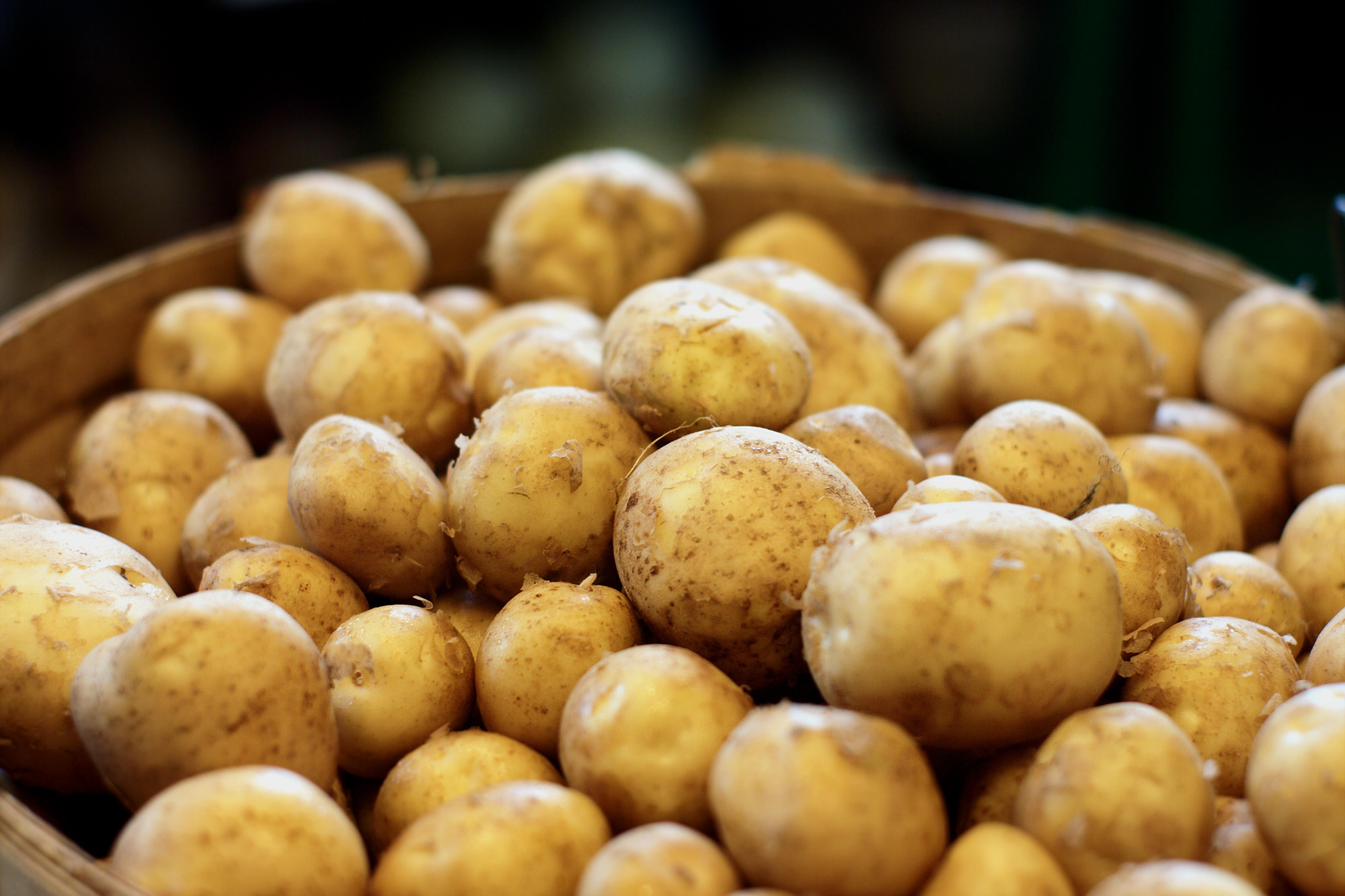 Fresh season potatoes