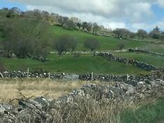 Enjoying Ireland's countryside. Welcome Sue & family!
