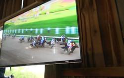 29 TV Horse Race Pic