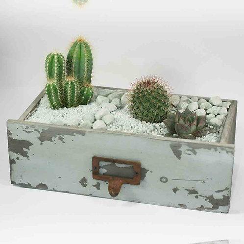 Кактусовый садик