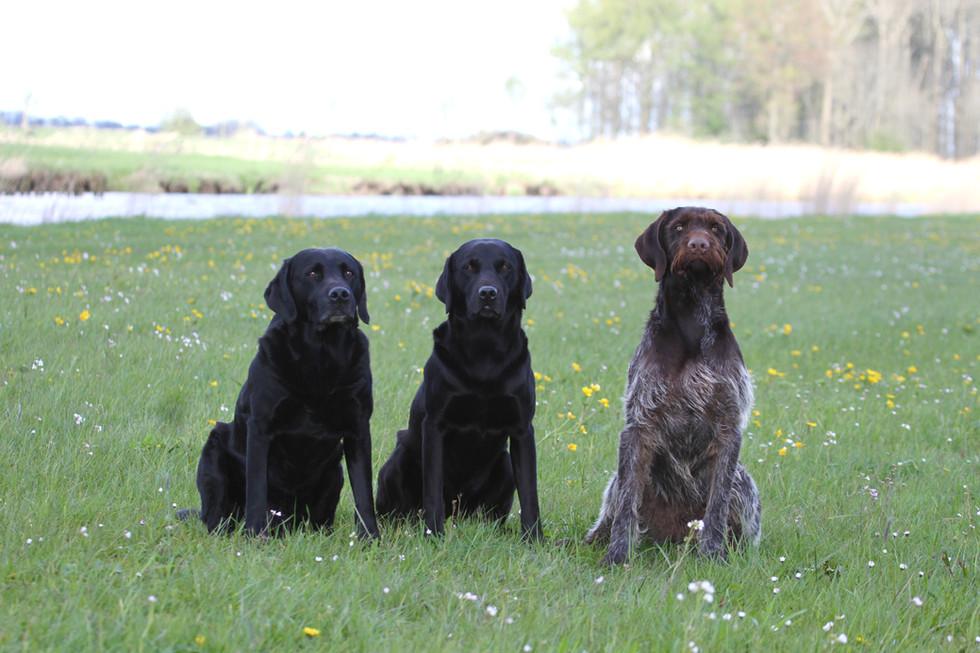 Sky, Fisher und Quintus